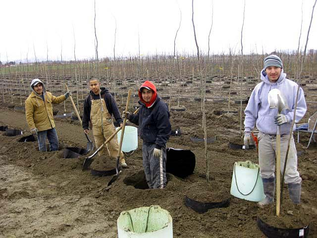 The Crew During Planting Season - Urban Forest Nursery, Inc.