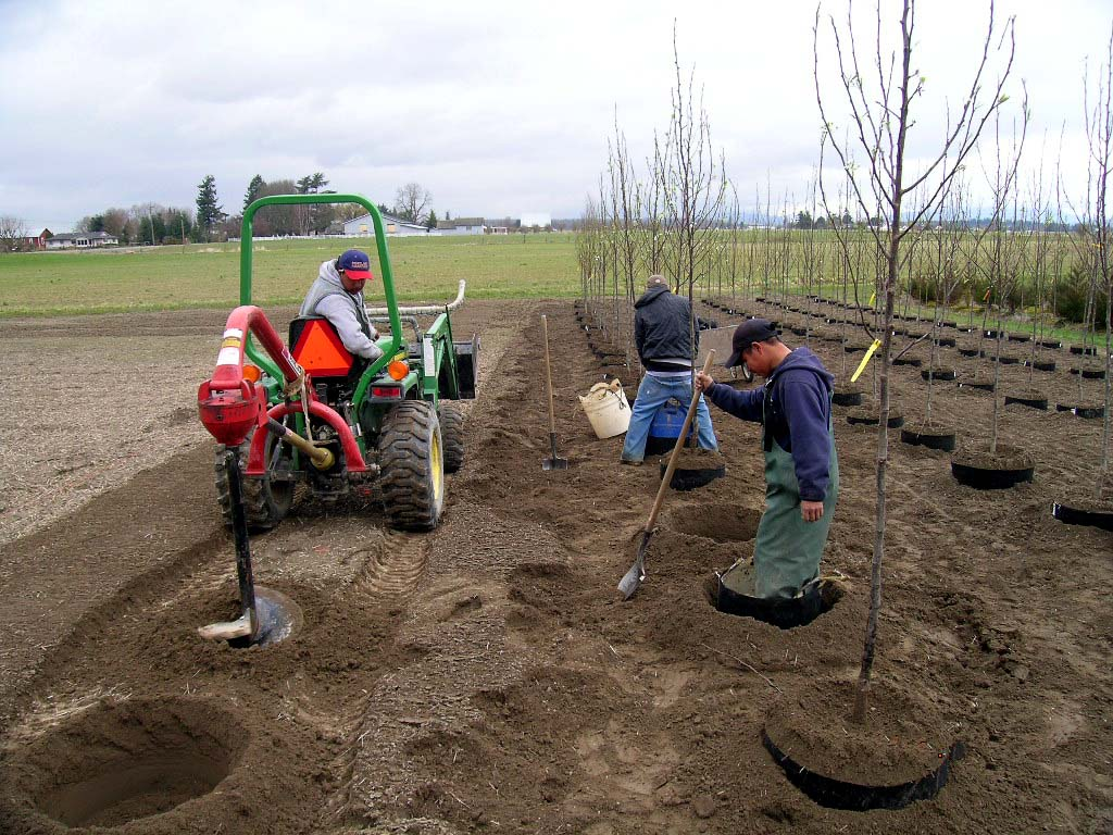 Planting in the Grow Bags - Urban Forest Nursery, Inc.