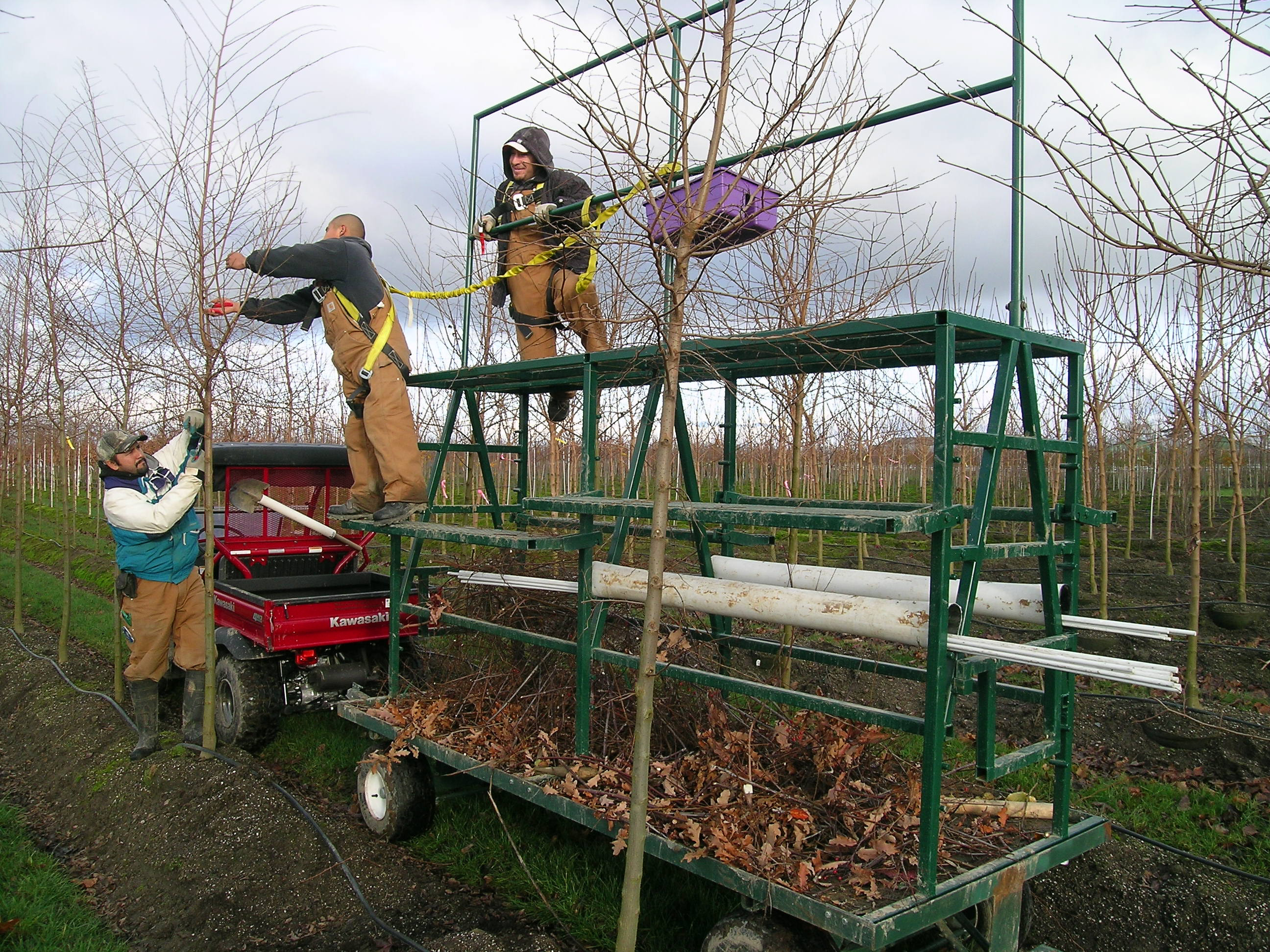 Pruning Cart at Work - Urban Forest Nursery, Inc.