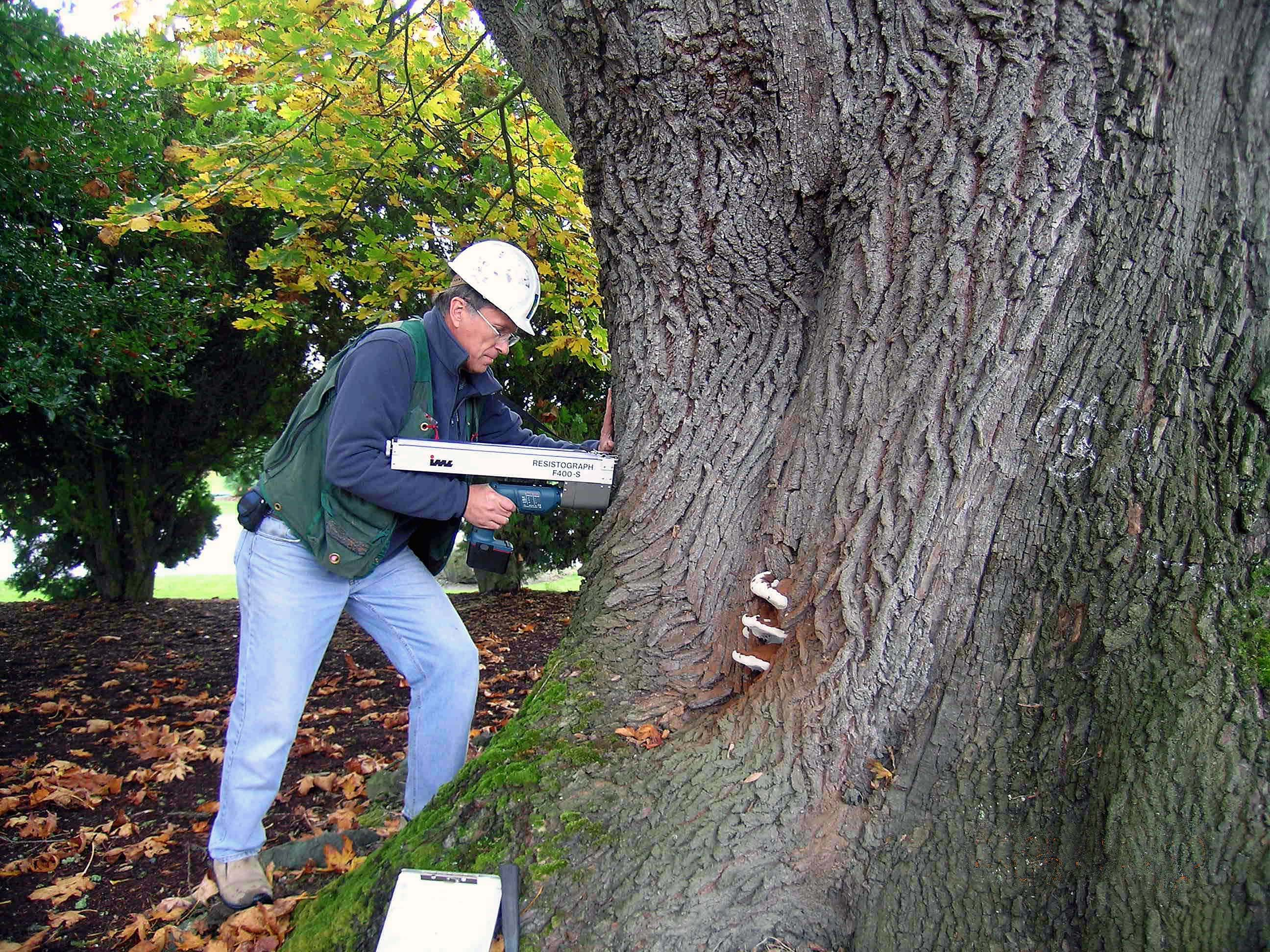Jim Working with the Resistograph - Urban Forestry Services, Inc.